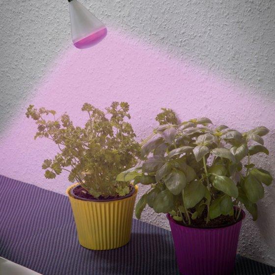 Commander en toute simplicit lampe led pour plantes for Plantes a commander